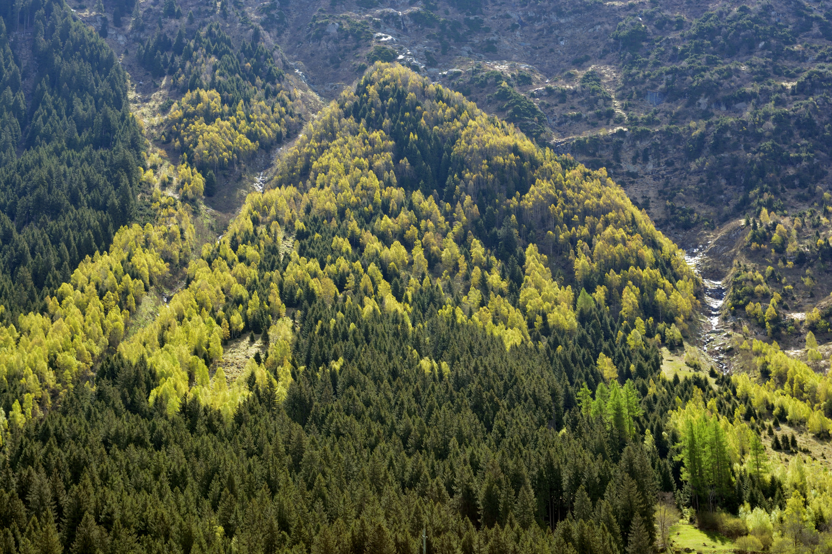 Wald über der Gotthardroute bei Wassen