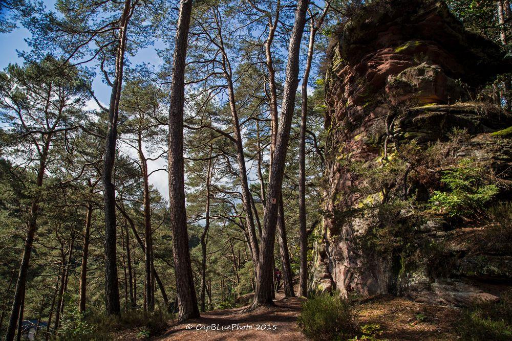 Wald und Fels auf dem Dahner Felsenpfad