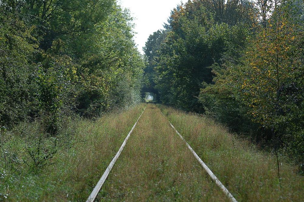 Wald- und Wiesenbahn