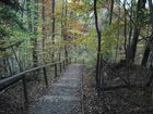 Wald von Kloster Andechs