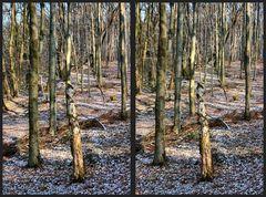 Wald vor lauter Baeumen...
