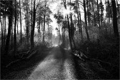 Wald-Weg