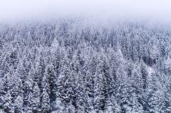 Wald & Wolken
