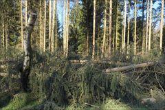 Wald (zerstört)