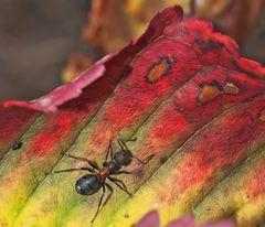 Waldameise und Herbst-Impressionen!