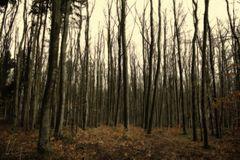 Waldansichten... 2