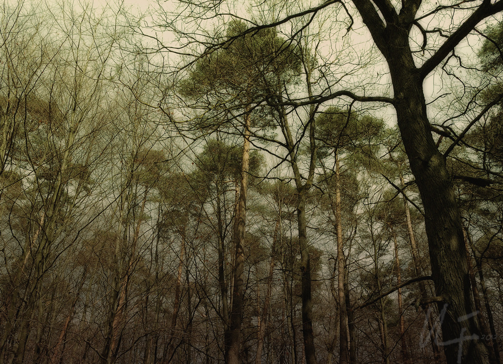 Waldansichten... 3