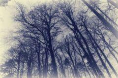 Waldansichten... 4