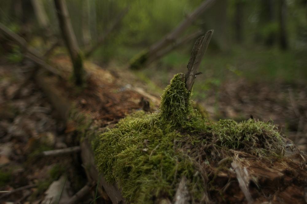 Waldansichten (85)