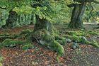 Waldansichten (97)