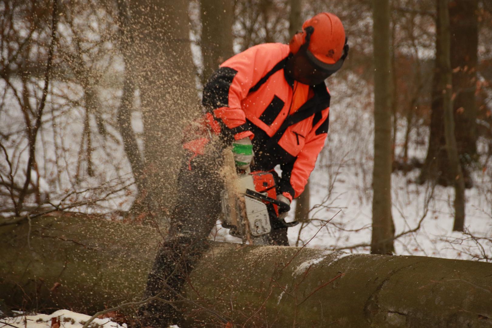 Waldarbeit bei der Durchforstung