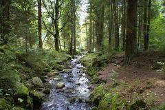 Waldbach, Bayerischer Wald