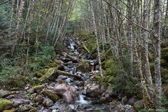 Waldbach im Squamish-Gebiet