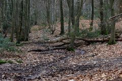 Waldbächlein