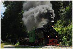 Waldbahn in der Steiermark.