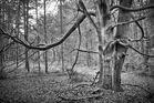 Waldbegegnung