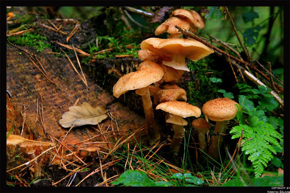 Waldbewohner im Herbst