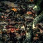Waldboden im Herbst