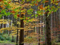 Waldbunt