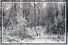 Waldeinblick