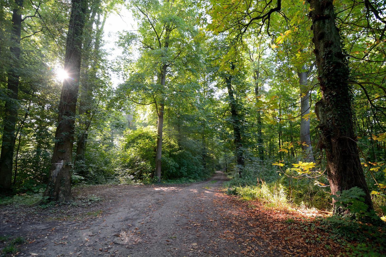Waldeindrücke