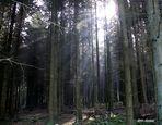 Waldeslicht