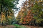 Waldfarben im Herbst