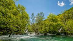 Waldfrühling am Wasser