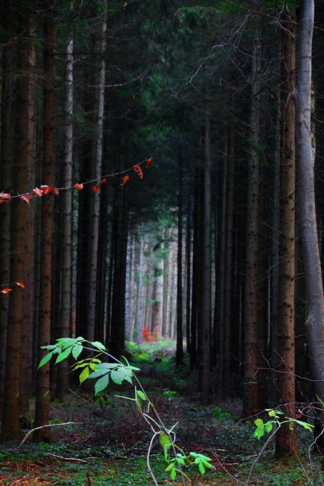 Waldgang