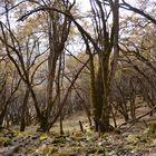 Waldgebiet südlich von Bhimtang auf dem Manaslu-Trek
