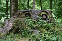 Waldgeist oder grosse Augen im Wald...
