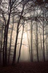 Waldgeschichten