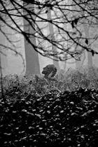 Waldgesichter