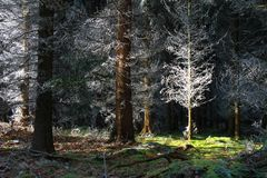 Waldgespenster
