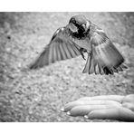 Waldi hat ´n Vogel