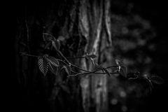Wald...III