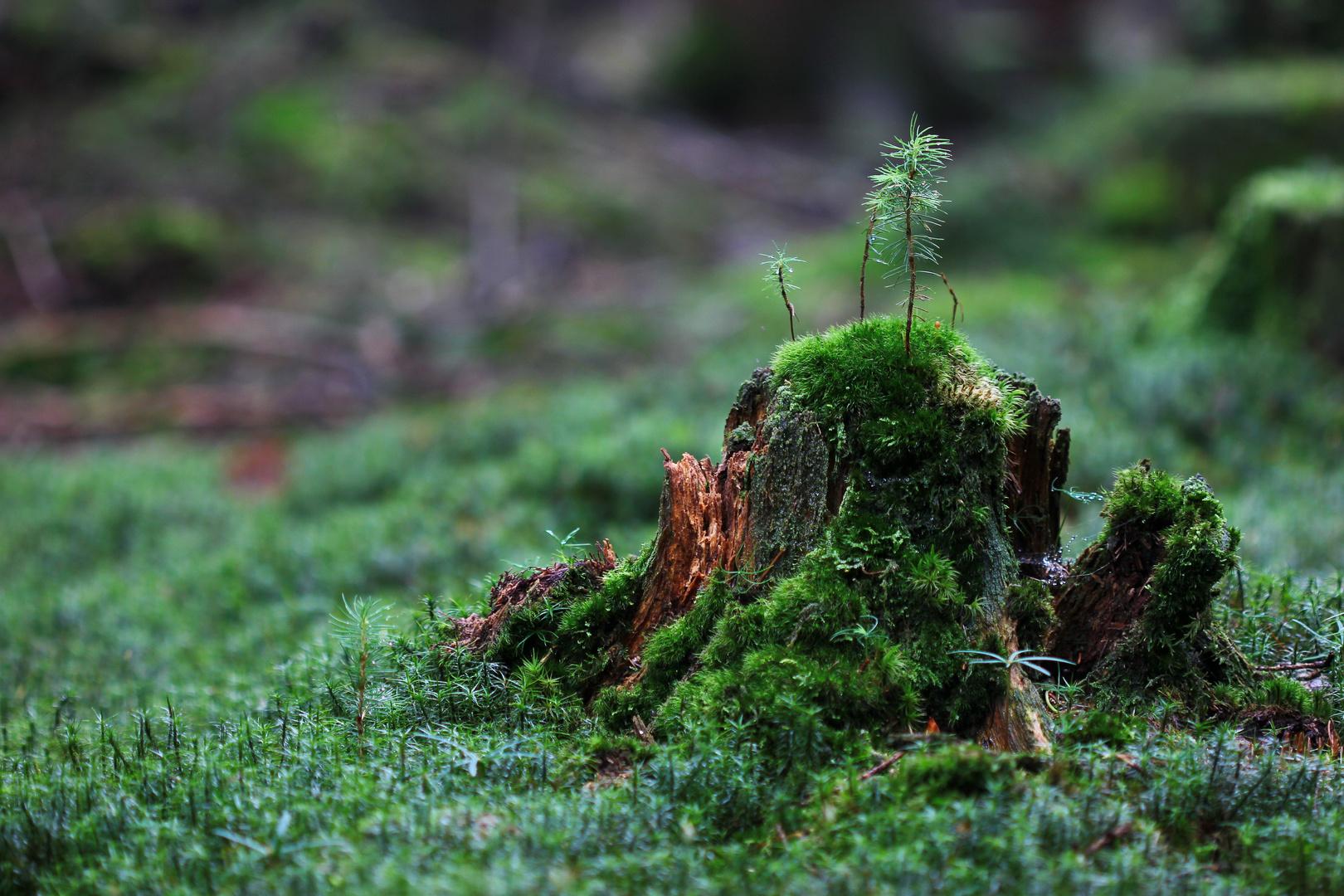 Waldinselwald