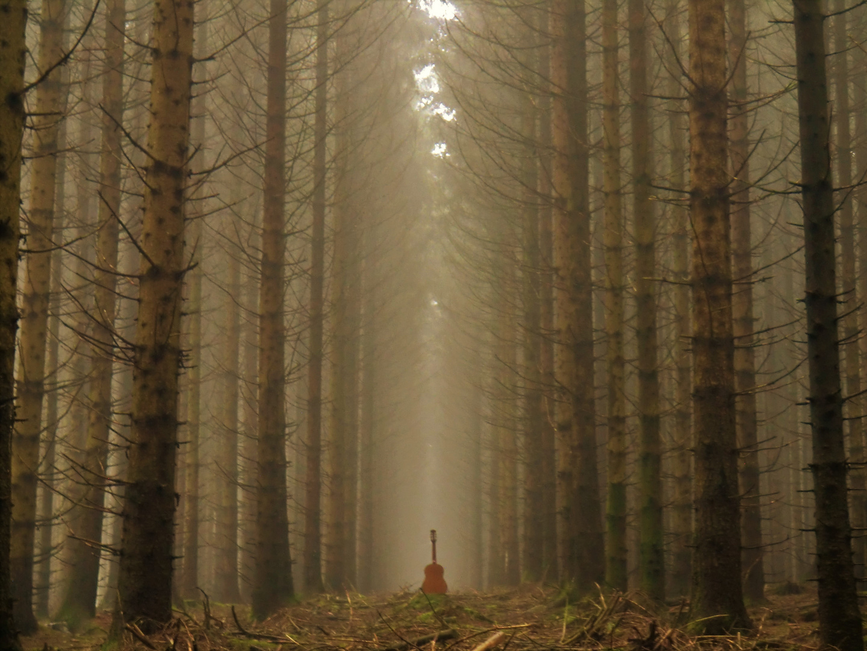 Waldkathedrale