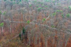 Waldkreuzung
