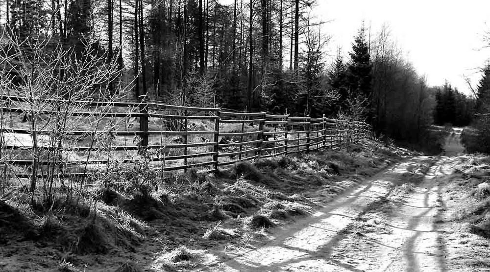 Waldkultur II
