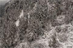Waldlandschaft im Schnee