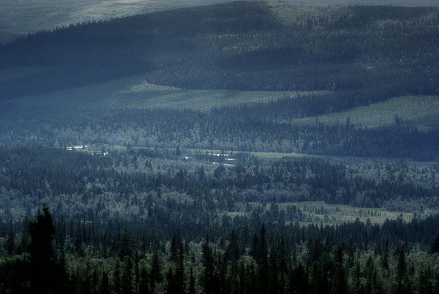 Waldlandschaft in Mittelschweden