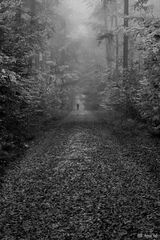 Waldlauf im Herbst