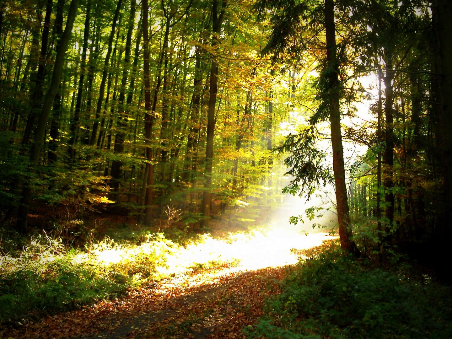 Waldlicht
