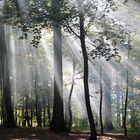 Waldlicht bricht