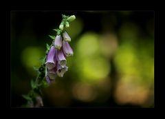 Wald(Licht)2