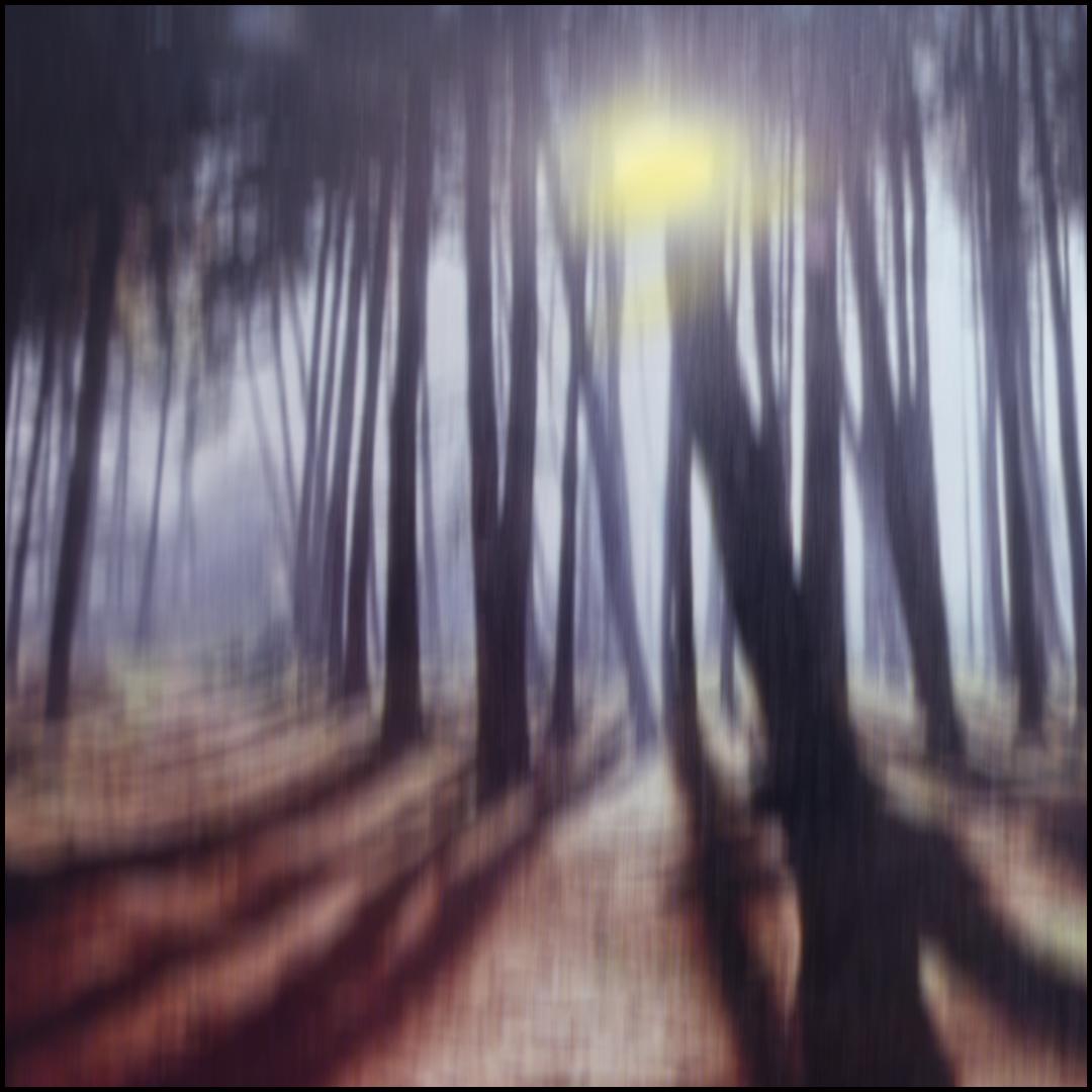Wald.Licht.Spiele