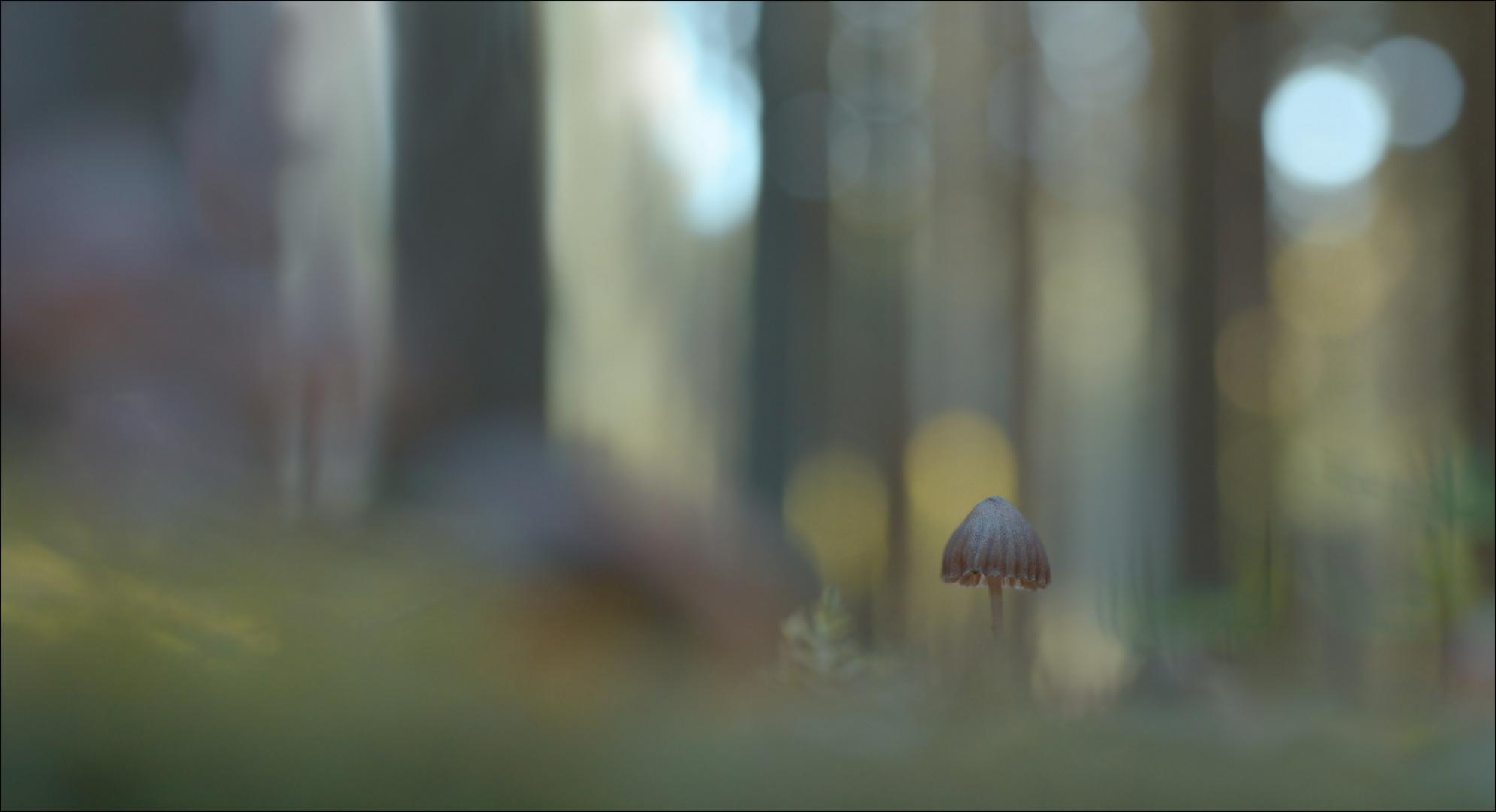WaldLichtSpiele (2)