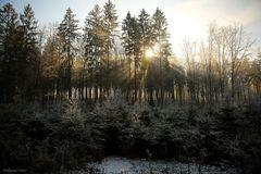 Waldlichtung I
