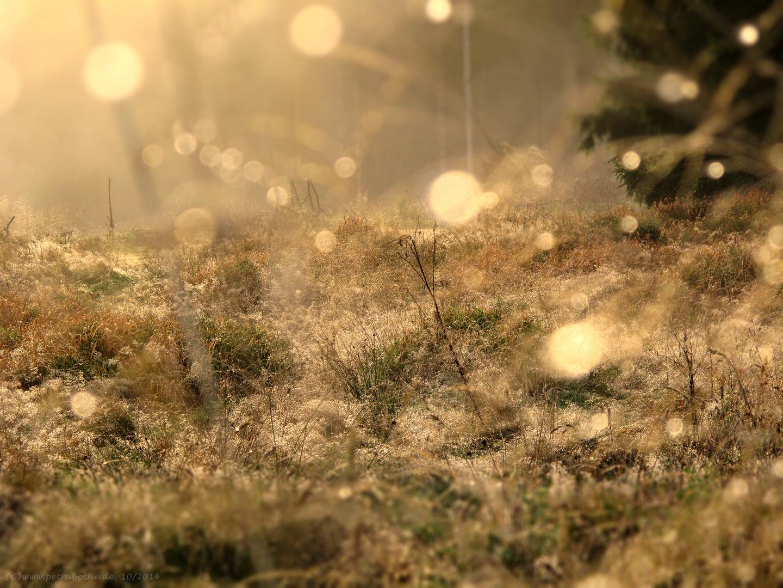 Waldlichtung im letzten Tageslicht
